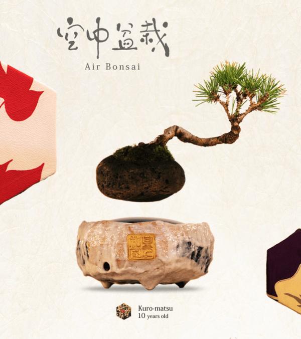 Air Bonsai, tu bonsai flotante en casa