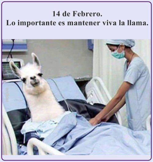 memes 14 de febrero